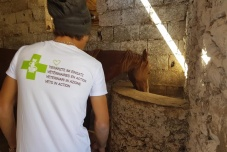 Animal rescue in Morocco